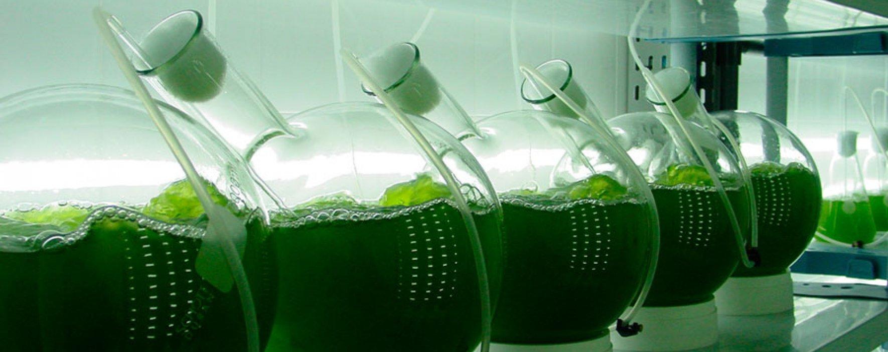 Alternativa ecológica que limpiará fuentes hídricas con microalgas