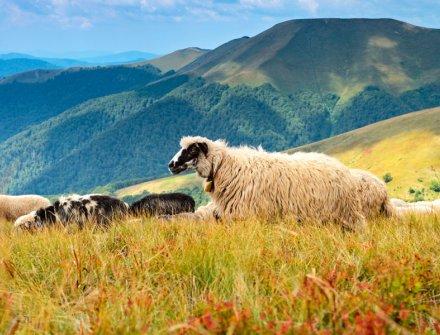Bancompartir: Apoyo al campo y al emprendimiento colombiano