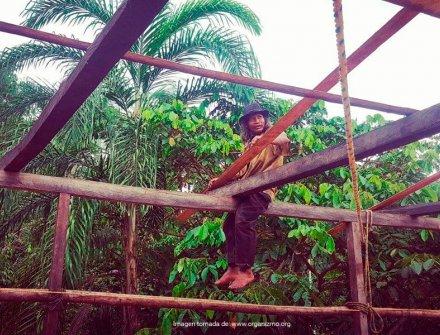 Comunidad Muina Murui cuenta con sistemas sostenibles