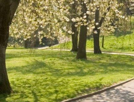 Espacios públicos y parques