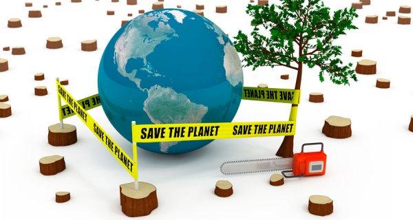 Los bosques: Base del bienestar humano