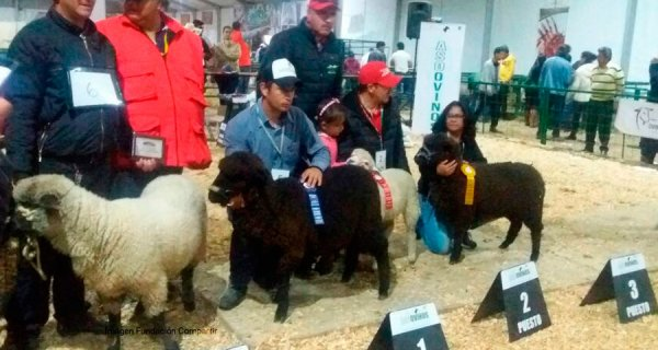 Precooperativa de ovinos presente en Expocundinamarca